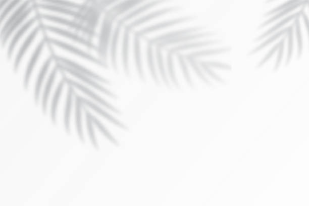 Shadow effects with tropical palm leaves in the corner. Shadow effects with tropical palm leaves in the corner. Flat lay background with tropical leaf shadow. Applicable for mockup, template background. Vector illustration shadow stock illustrations