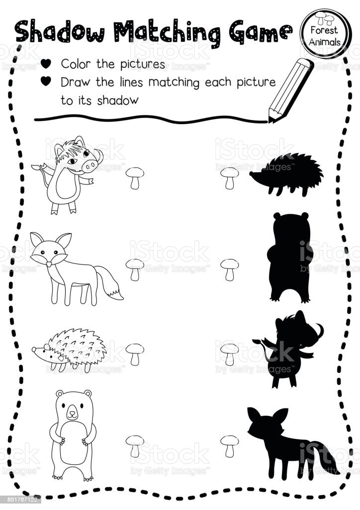 Shadow Matching Game Forest Animal Coloring Page Version Stock Illustration  - Download Image Now - IStock