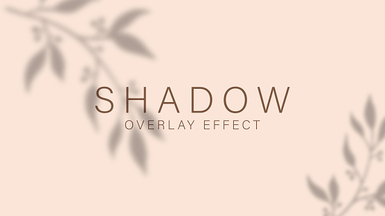Shadow overlay effect. Transparent soft light and shadows from branches, plant, foliage and leaves. Mockup of transparent leaf shadow