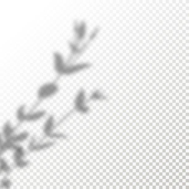 bildbanksillustrationer, clip art samt tecknat material och ikoner med skugga overlay lämnar vector mockup. transparent skuggor overlay effekter av en anläggning i en modern minimalistisk stil. - skuggig