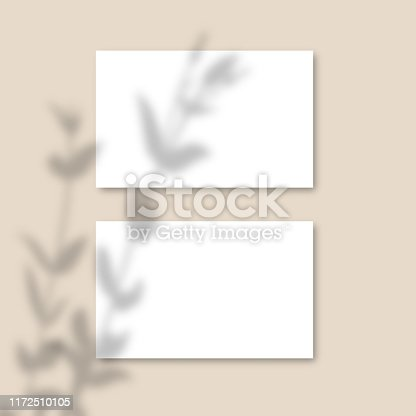 Shadow Overlay Plant Vector Mockup horizontal business Card. Vector Realistic shadows overlays leaf on pink background. Template Flyer, Card, blank, social media post, logo in minimal trendy style.