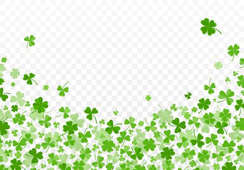 Shamrock or clover leaves flat design green backdrop pattern vector illustration isolated on white background. St Patricks Day shamrock symbols decorative elements.