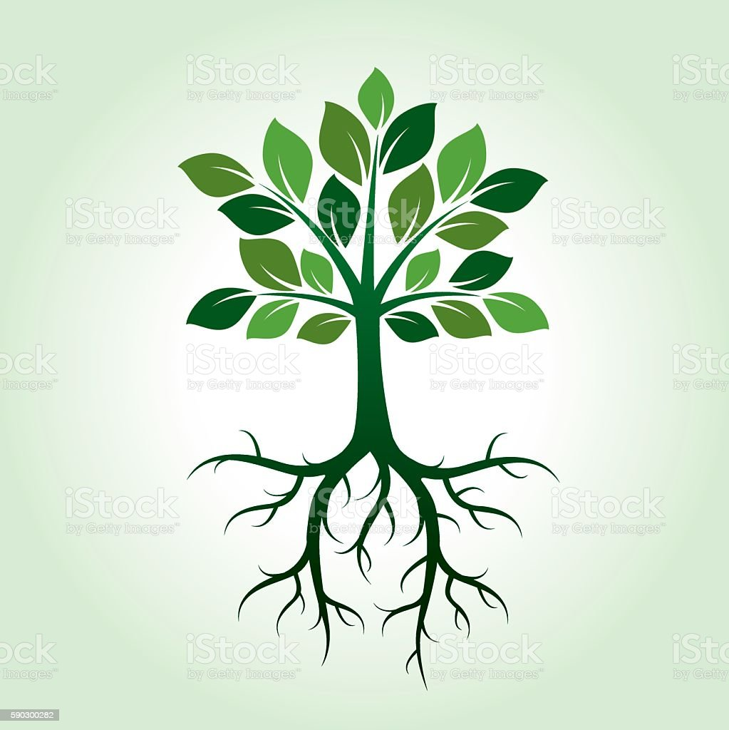 Shape of Green Tree. Vector Illustration. royaltyfri shape of green tree vector illustration-vektorgrafik och fler bilder på bark