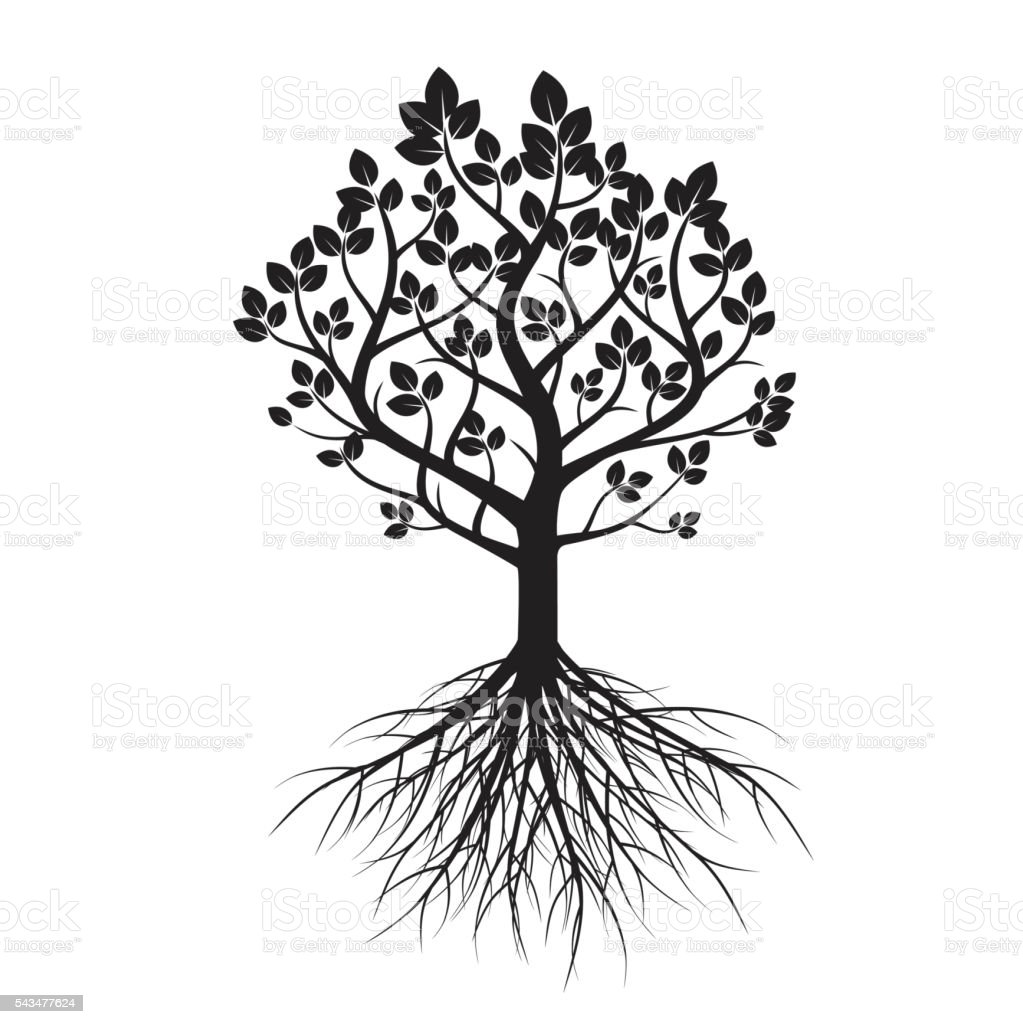 shape of tree and roots vector illustration stock vector art
