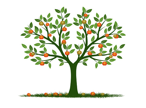 Shape of Tree with Leaves and Fruits. Vector outline Illustration. Plant in Garden.