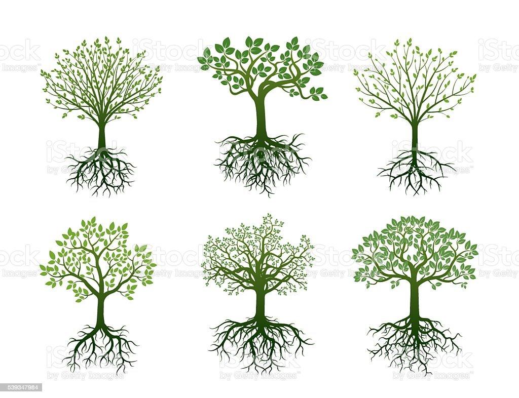 Forma de árboles de raíces y Leafs. Ilustración de vectores. - ilustración de arte vectorial