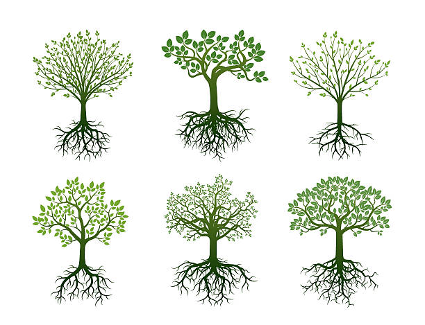 Shape of Trees, Roots and Leafs. Vector Illustration. Shape of Trees, Roots and Leafs. Vector Illustration. origins stock illustrations