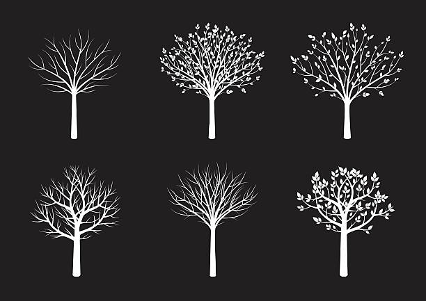 form weiße bäumen. vektor-illustration. - winterruhe stock-grafiken, -clipart, -cartoons und -symbole