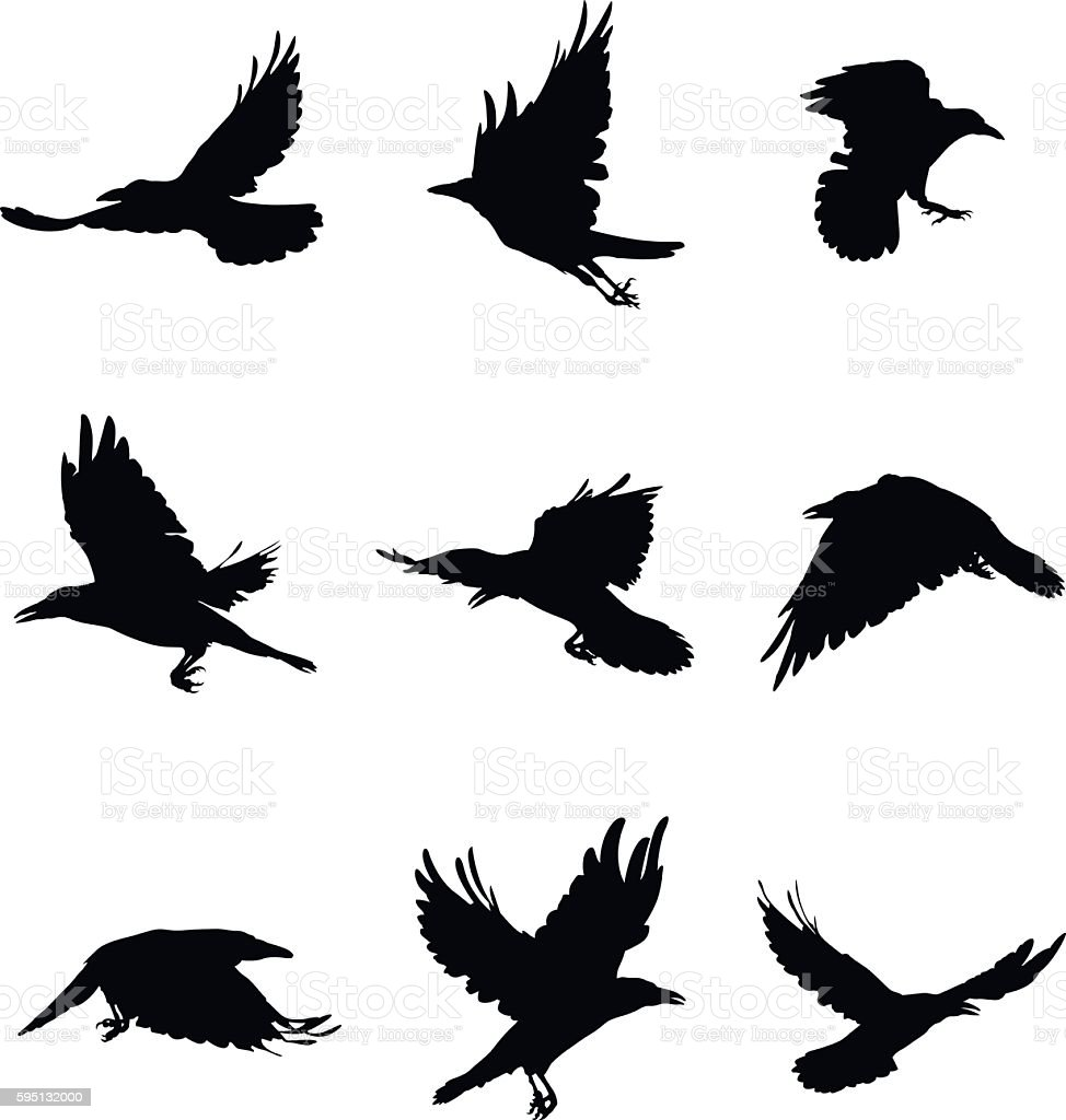how to draw a crow flying