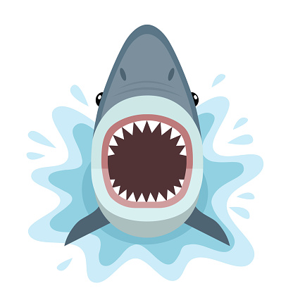 Shark attacks from the water.