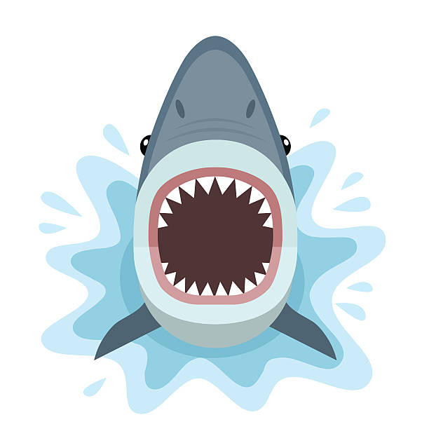 Shark attacks from the water. Vector illustration of shark with open mouth full of sharp teeth, isolated on white background. great white shark stock illustrations