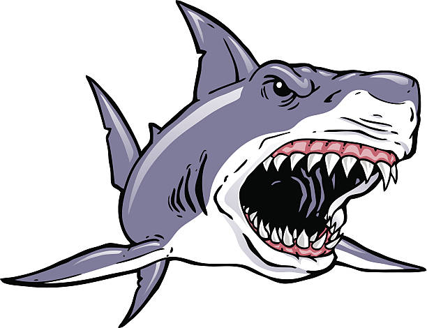 Shark Charge A shark charging. 2 spot color plus black. Simple gradients and shapes for easy printing, separating and color changes. Major elements layered separately for easy editing. Black and white outline version also included. File formats: EPS and JPG great white shark stock illustrations