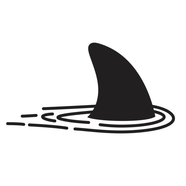 Shark fin vector icon logo dolphin character illustration symbol graphic Shark fin vector icon logo dolphin character illustration symbol graphic animal fin stock illustrations