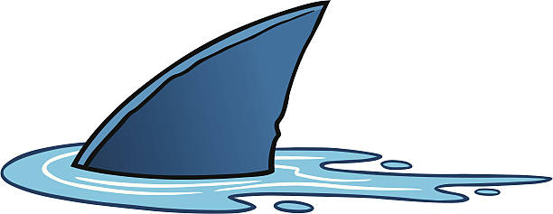 Shark Fin Shark Fin - Fin and Water are separately grouped objects and can be quickly repositioned or removed for your project. dorsal fin stock illustrations
