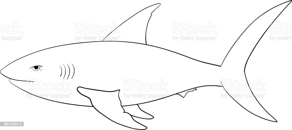Shark Hand Drawn Outline Sketch Stock Vector Art U0026 More Images Of Animal 667428010 | IStock