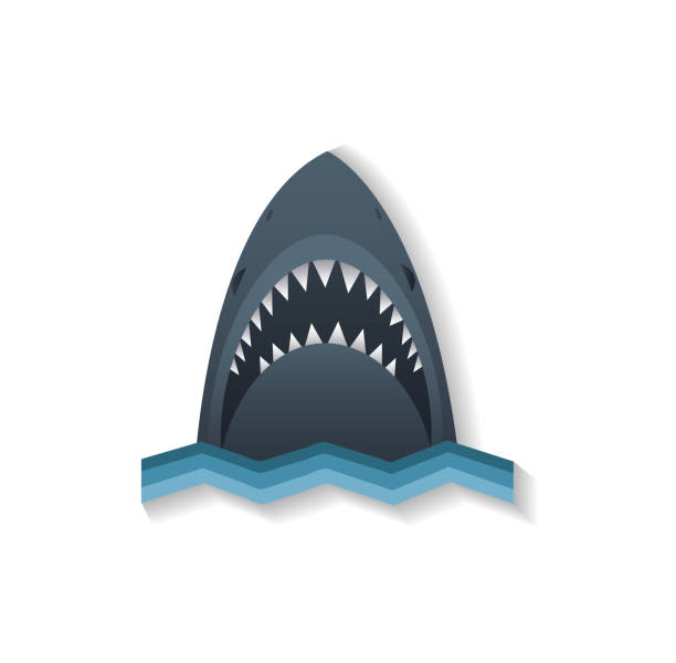 Shark icon vector illustration Shark icon vector illustration animal fin stock illustrations