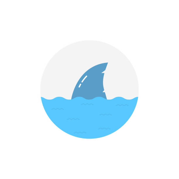 shark in water isolated on white background shark in water isolated on white background. concept of wild animal near summer beach or big fish. simple flat style trend modern round minimal graphic design animal fin stock illustrations
