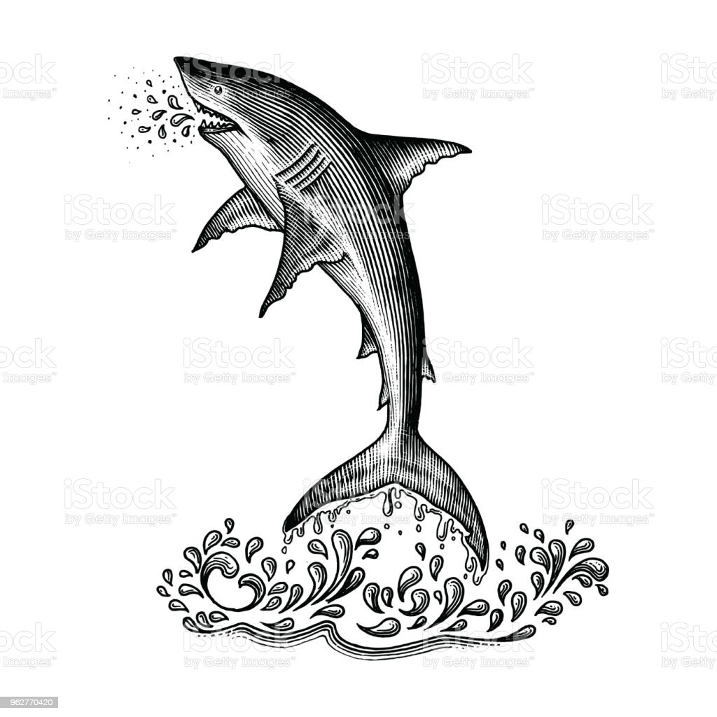 Shark jumping hand drawing vintage engraving style - arte vettoriale royalty-free di Acqua