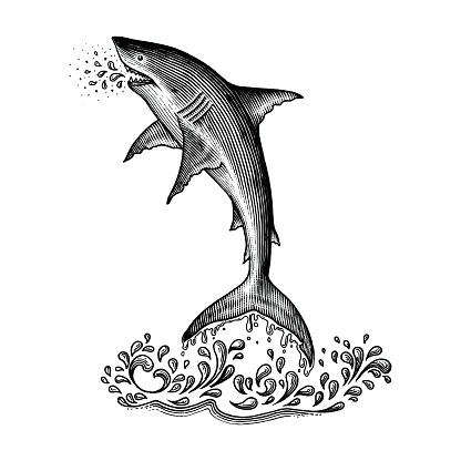 Shark jumping hand drawing vintage engraving style
