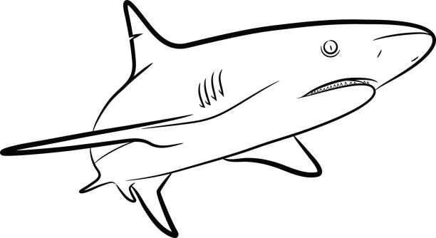 Shark Line Art vector art illustration