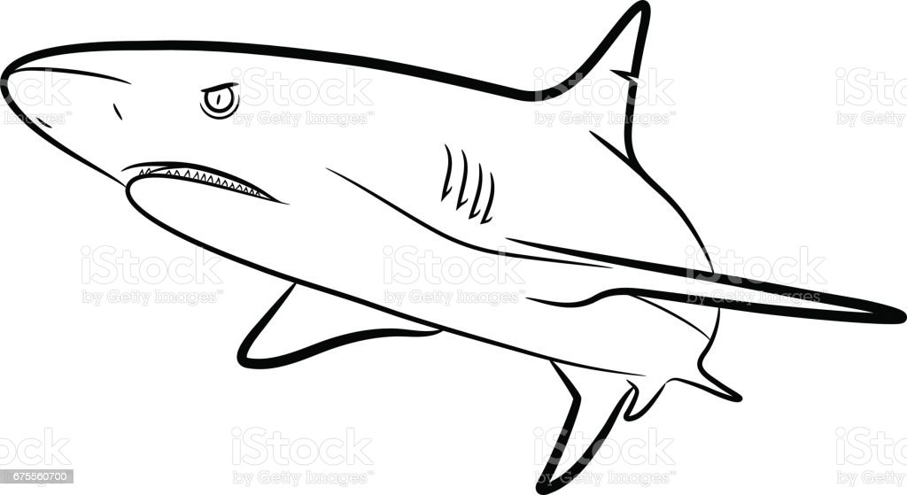 Line Drawing Shark : Shark line art stock vector more images of animal