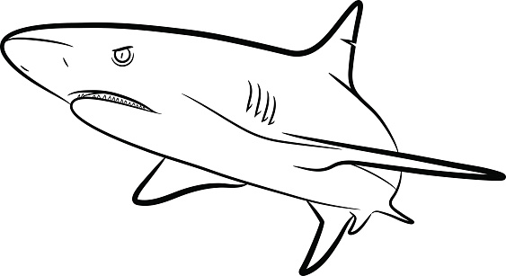 Shark Line Art Stock Illustration - Download Image Now