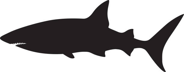 Shark Silhouette Vector illustration of a swimming shark silhouette. animal fin stock illustrations