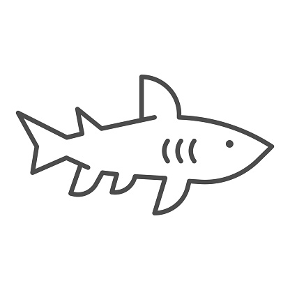 Shark thin line icon, marine concept, danger predatory fish sign on white background, Shark silhouette icon in outline style for mobile concept and web design. Vector graphics.