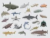 istock Shark Various Kind Identify Cartoon Vector 1191784502
