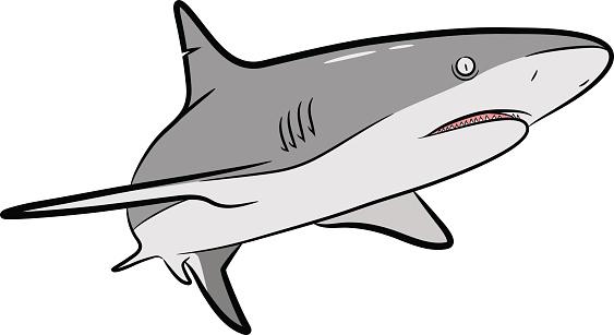 Shark Vector Cartoon Stock Illustration - Download Image Now