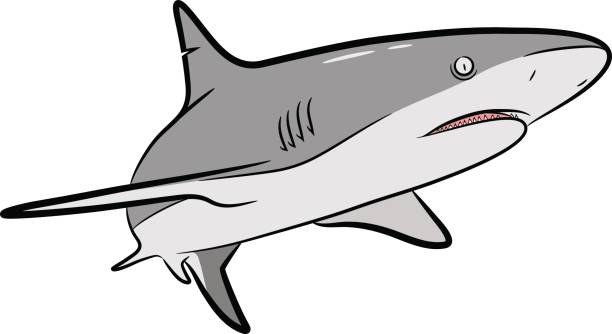 Shark Vector Cartoon vector art illustration