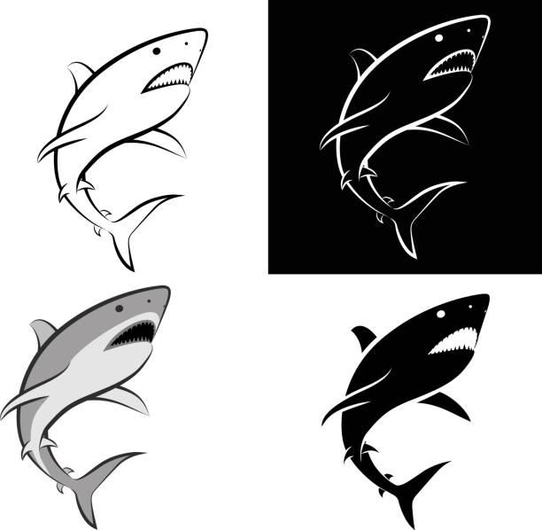 shark isolated shark - clip art illustration and line art great white shark stock illustrations