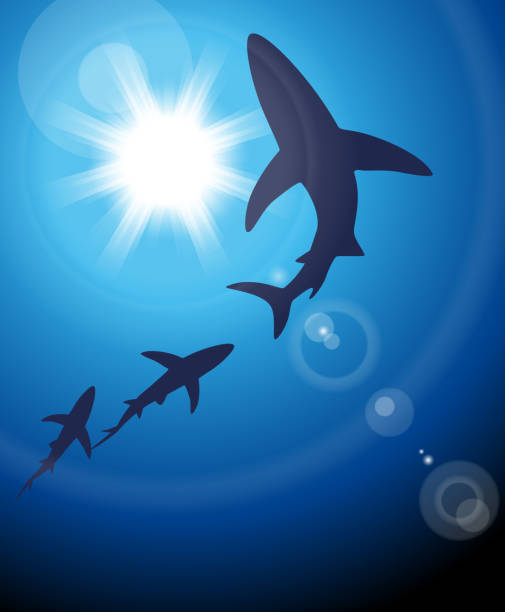 Shark Gradient and transparent effect used. great white shark stock illustrations