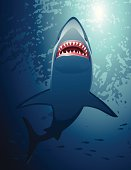 Shark hunting.