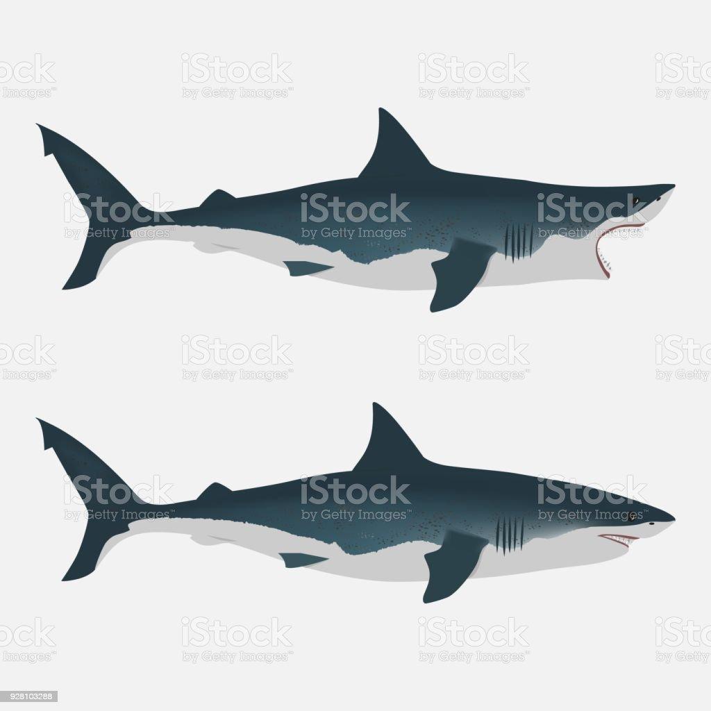 Hai Mit Mund öffnen Und Schließen Großer Weißer Fisch Flache ...