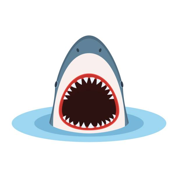 shark with open mouth - animal skull stock illustrations
