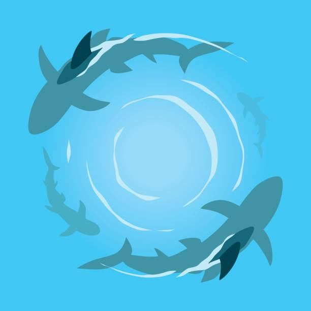 Sharks in the sea Four sharks in the sea swimming in a circle. Danger concept. animal fin stock illustrations