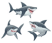 Vector illustration of three different sharks isolated on white.