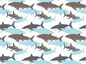Sharks Wallpaper 3