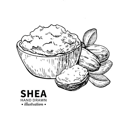 Shea Butter Vector Drawing Isolated Vintage Illustration ...