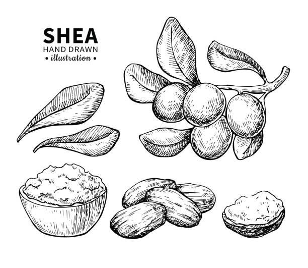 Royalty Free Shea Butter Clip Art, Vector Images