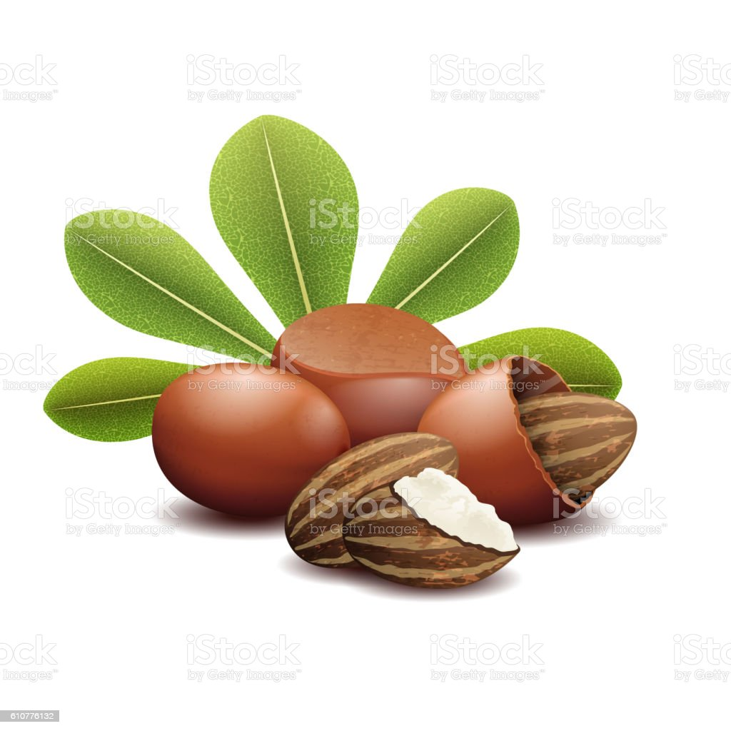 Shea nuts with green leaves vector illustration vector art illustration