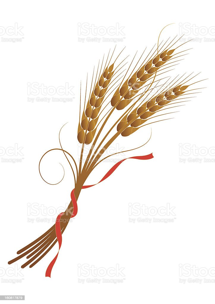 Sheaf of wheat tied with a ribbon royalty-free stock vector art