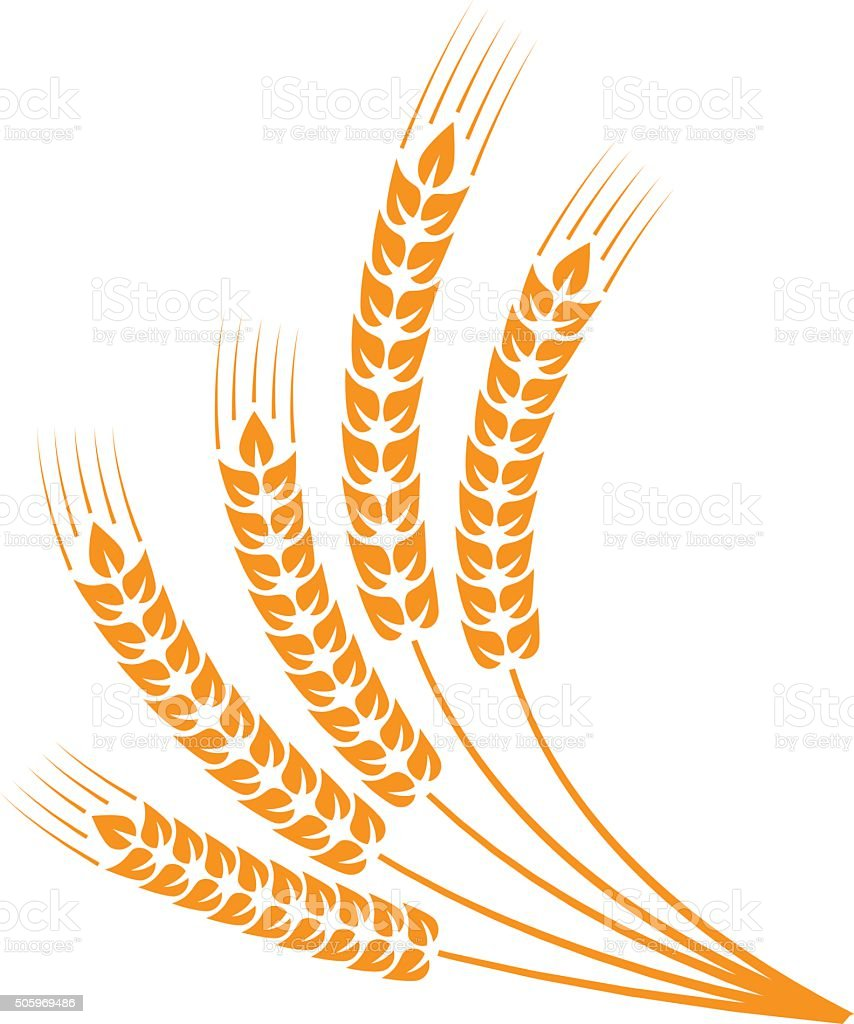 Sheaf of wheat vector art illustration