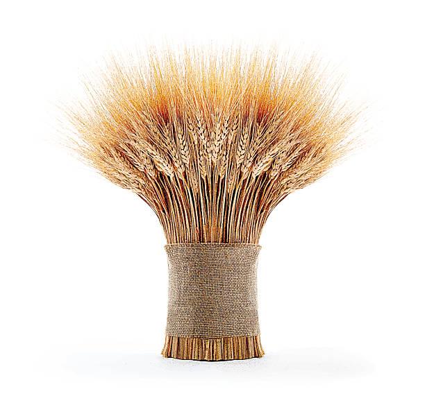 Sheaf Of Wheat Color Mezzotint illustration of a beautiful wheat bundle bundle stock illustrations