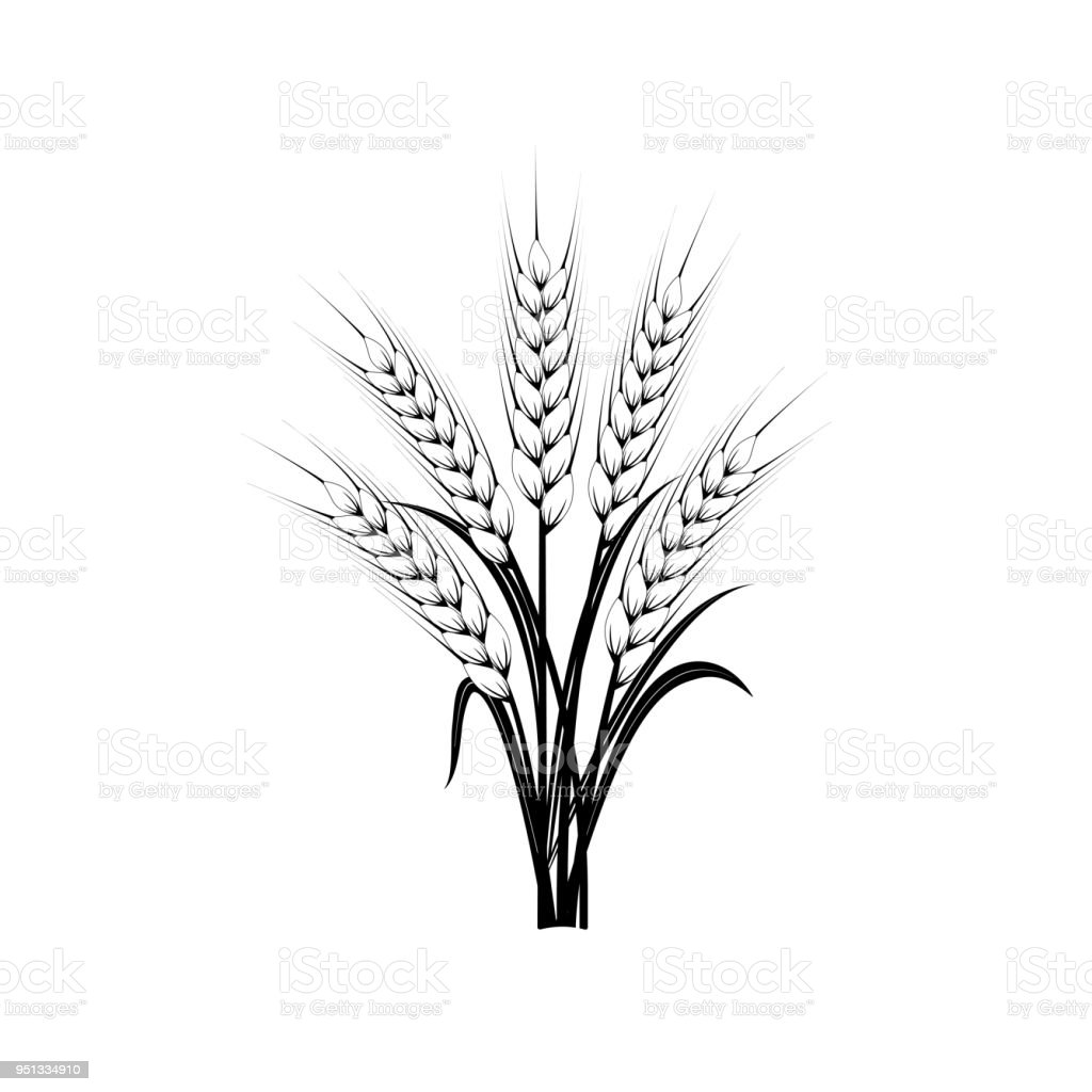 Beautiful girl with sheaf of wheat. Vector Clipart Image