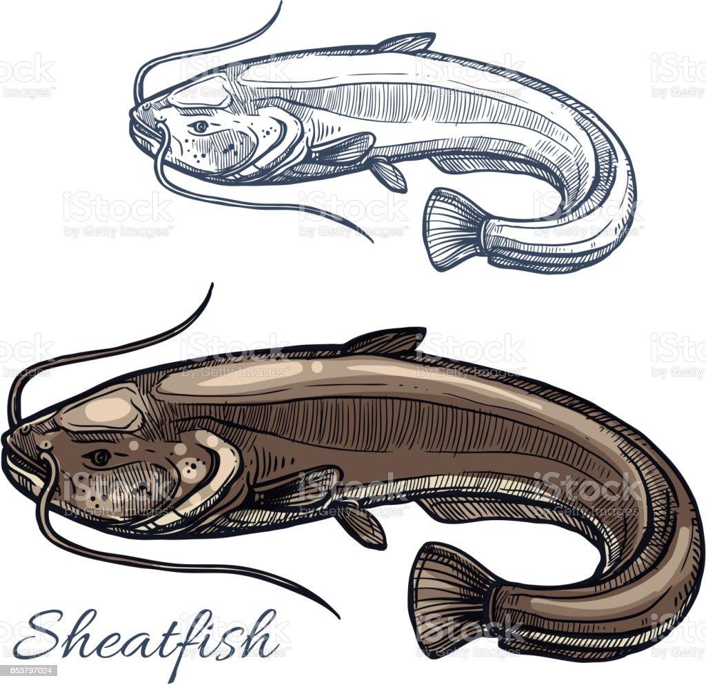 Sheatfish or catfish sketch for food design vector art illustration
