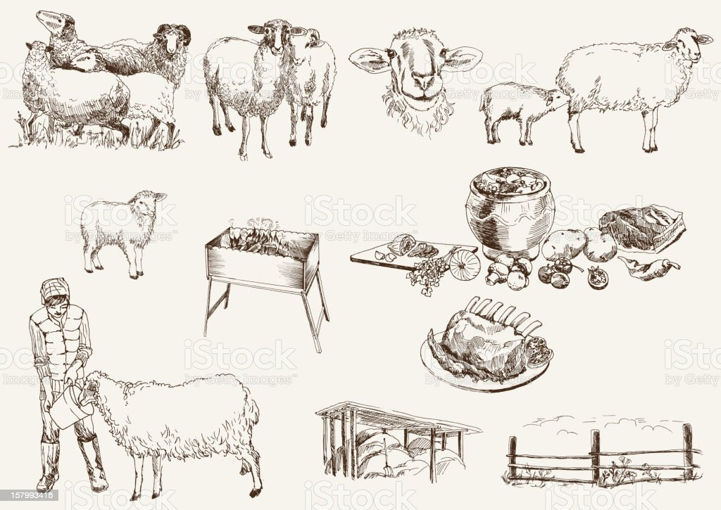 sheep breeding royalty-free stock vector art