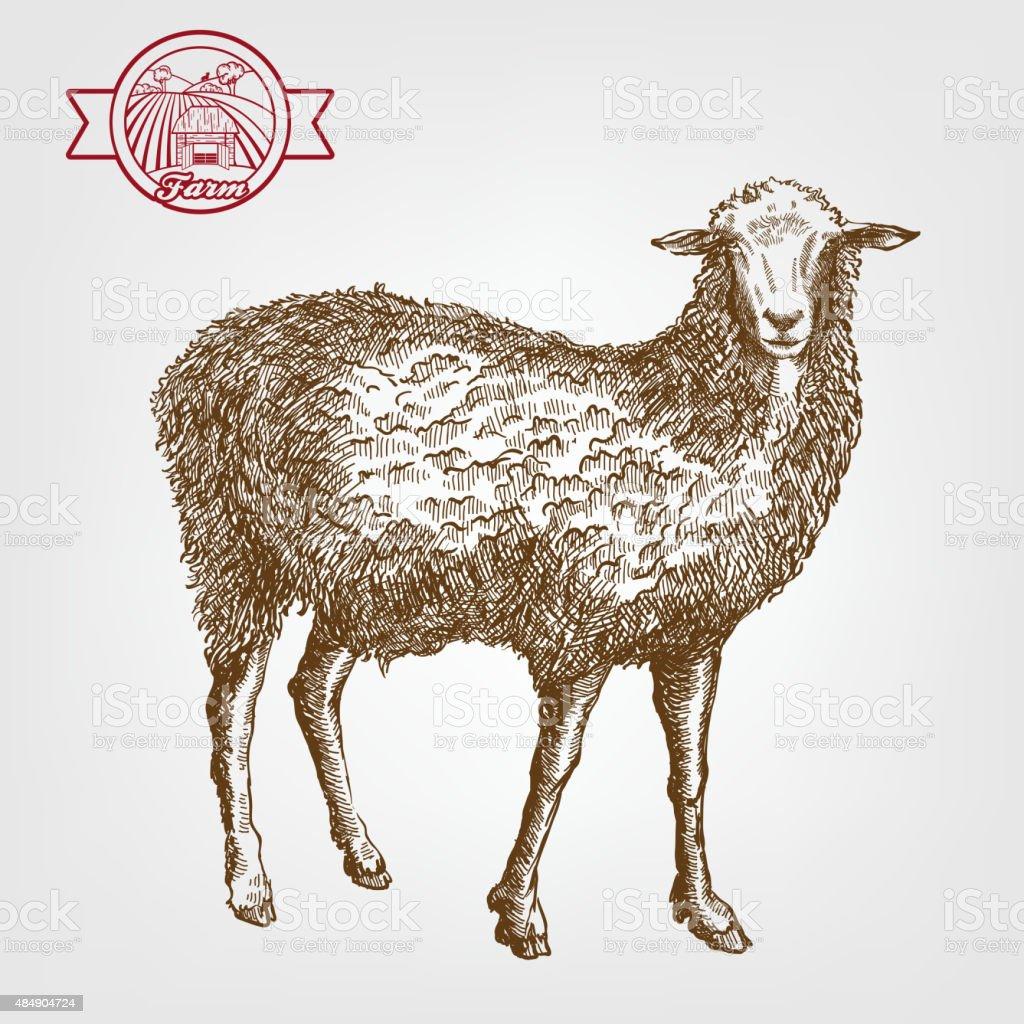 Élevage de moutons - Illustration vectorielle