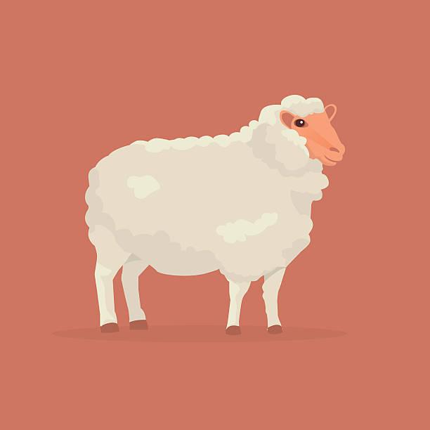 Sheep cartoon vector illustration - Illustration vectorielle